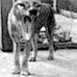 thylaxene --
