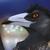 PolygonBird